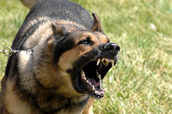 Laguna Hills Animal Attack Lawyer