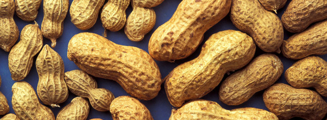 Peanut executive prison sentence