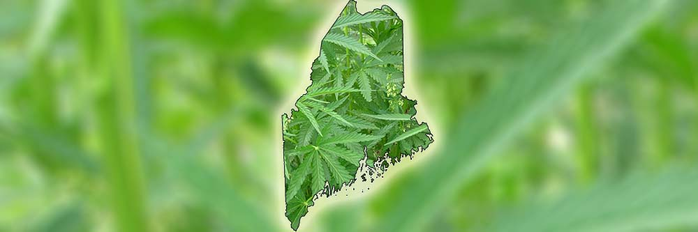 Maine Worker's Comp Medical Marijuana